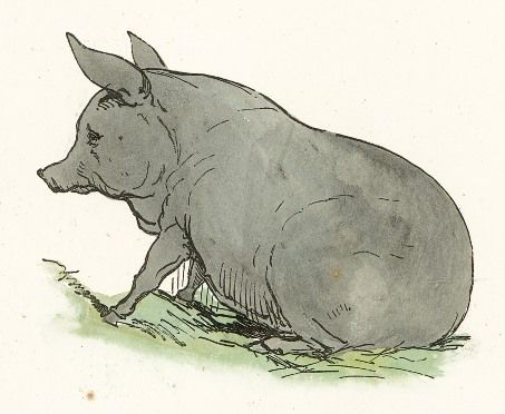 Drawing of pig that dates back to 1869